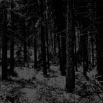 MOLOCH |  Abstrakter wald
